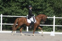 FEI dressage pony for sale