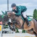 Westfalen gelding by Spiderman